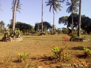 Diani plot for sale near Kongo River
