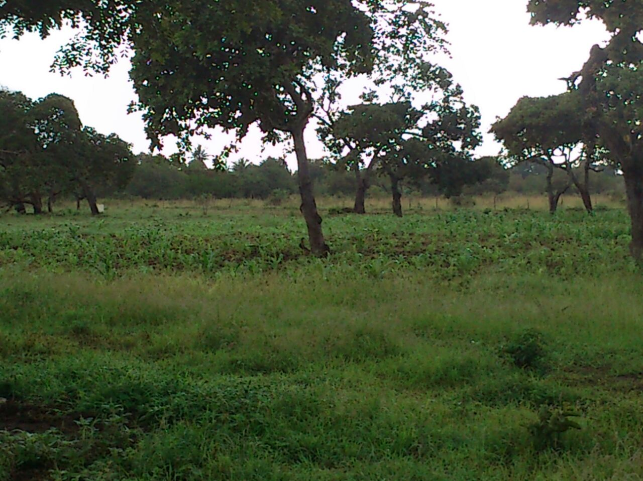 Land for sale in Mabokoni Kwale