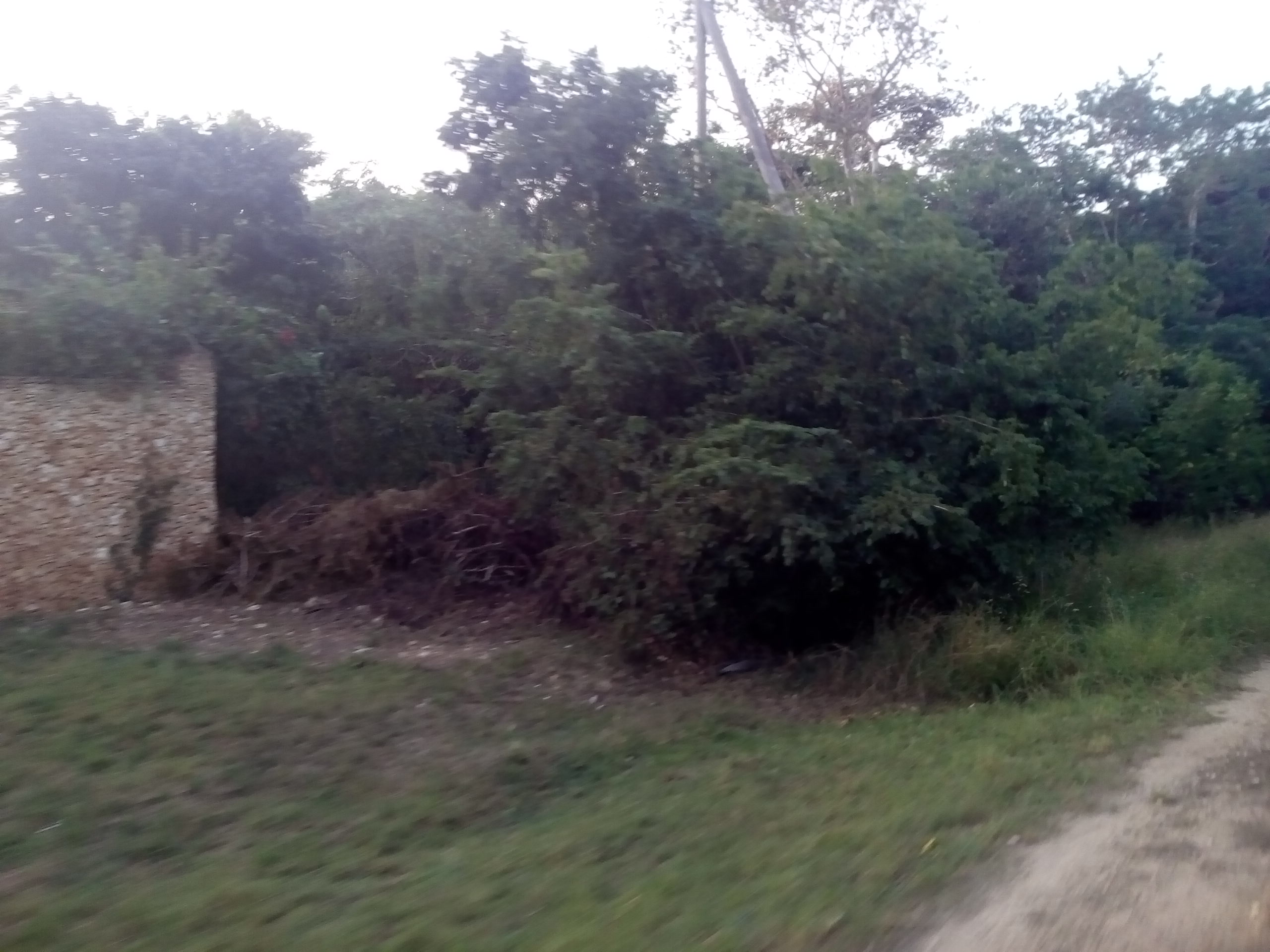5 Acres Land for Sale in Diani