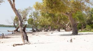 Shimoni Beach plot for sale