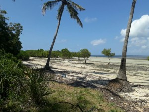 BeachFront property for Sale in Funzi Island