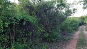 1. Plot of land for sale in Diani 3rd row