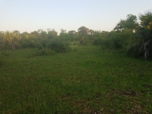Land for sale in Diani 4th row Mwisho Wa Rami