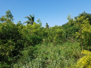 Land for sale in Diani 3rd row