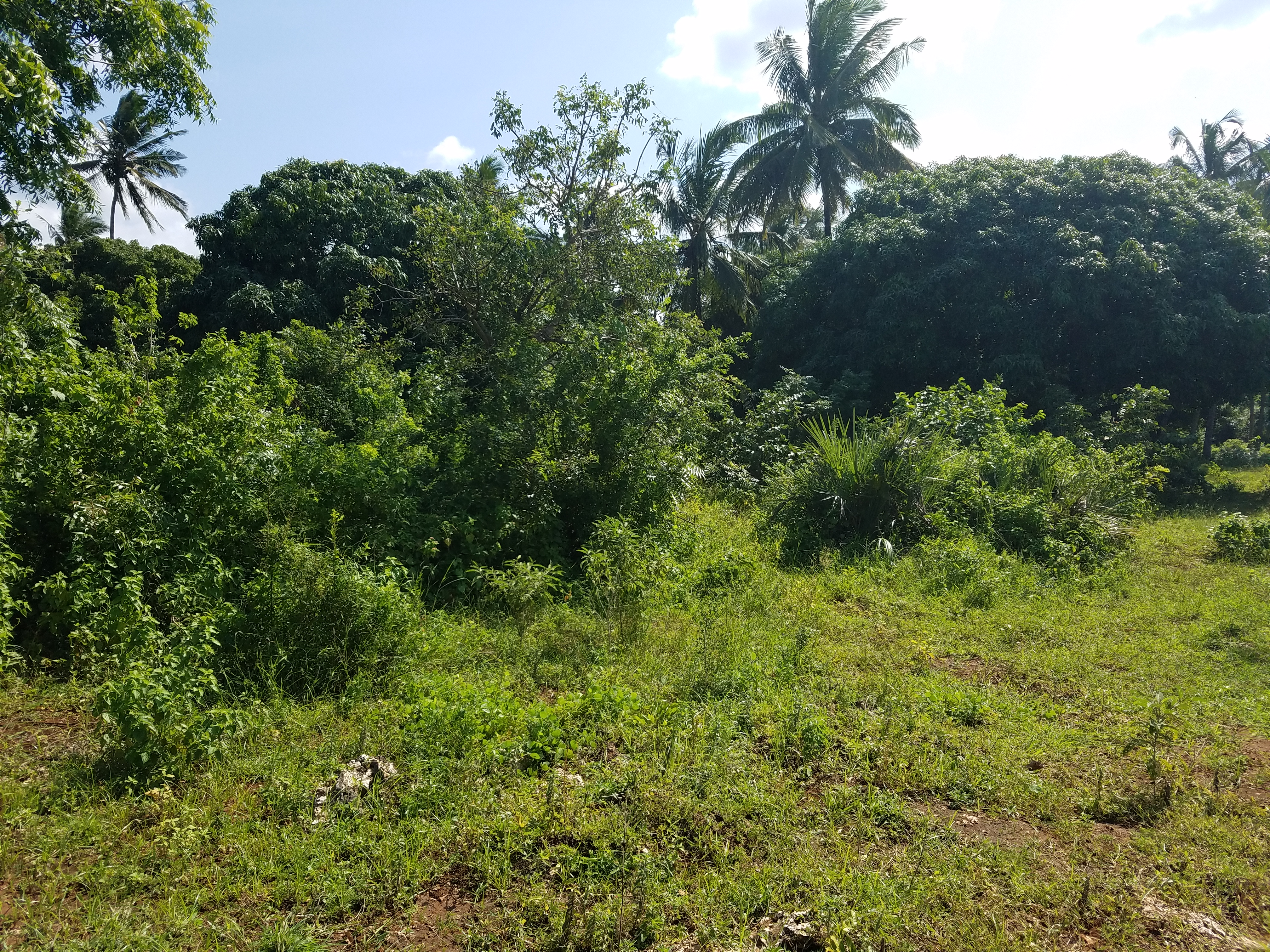 2.5 Acre Land for Sale in Diani