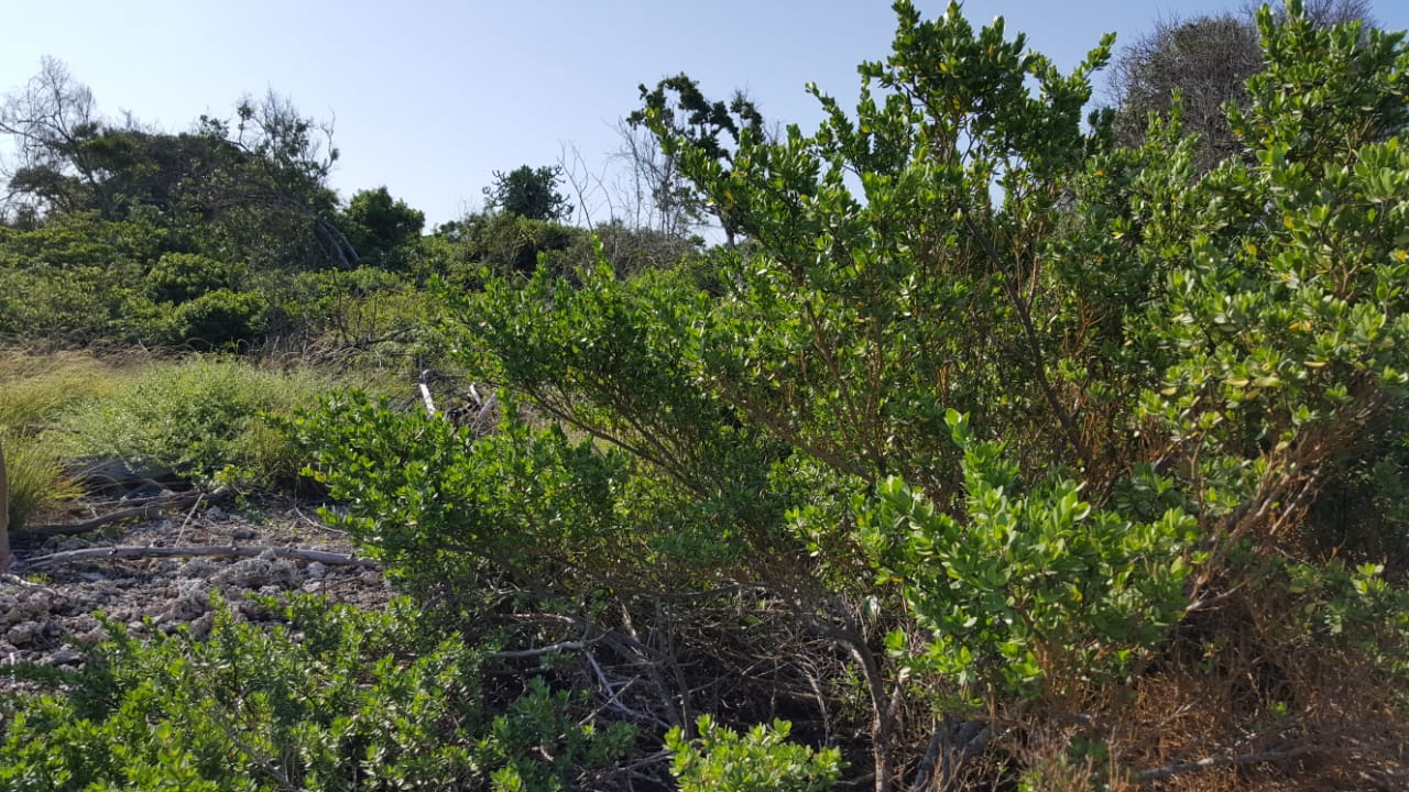 Oceanfront Plot of Land for sale in Ramisi Kinondo