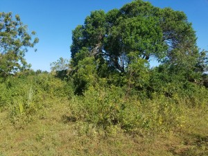 Plot of land for sale in Diani Beach