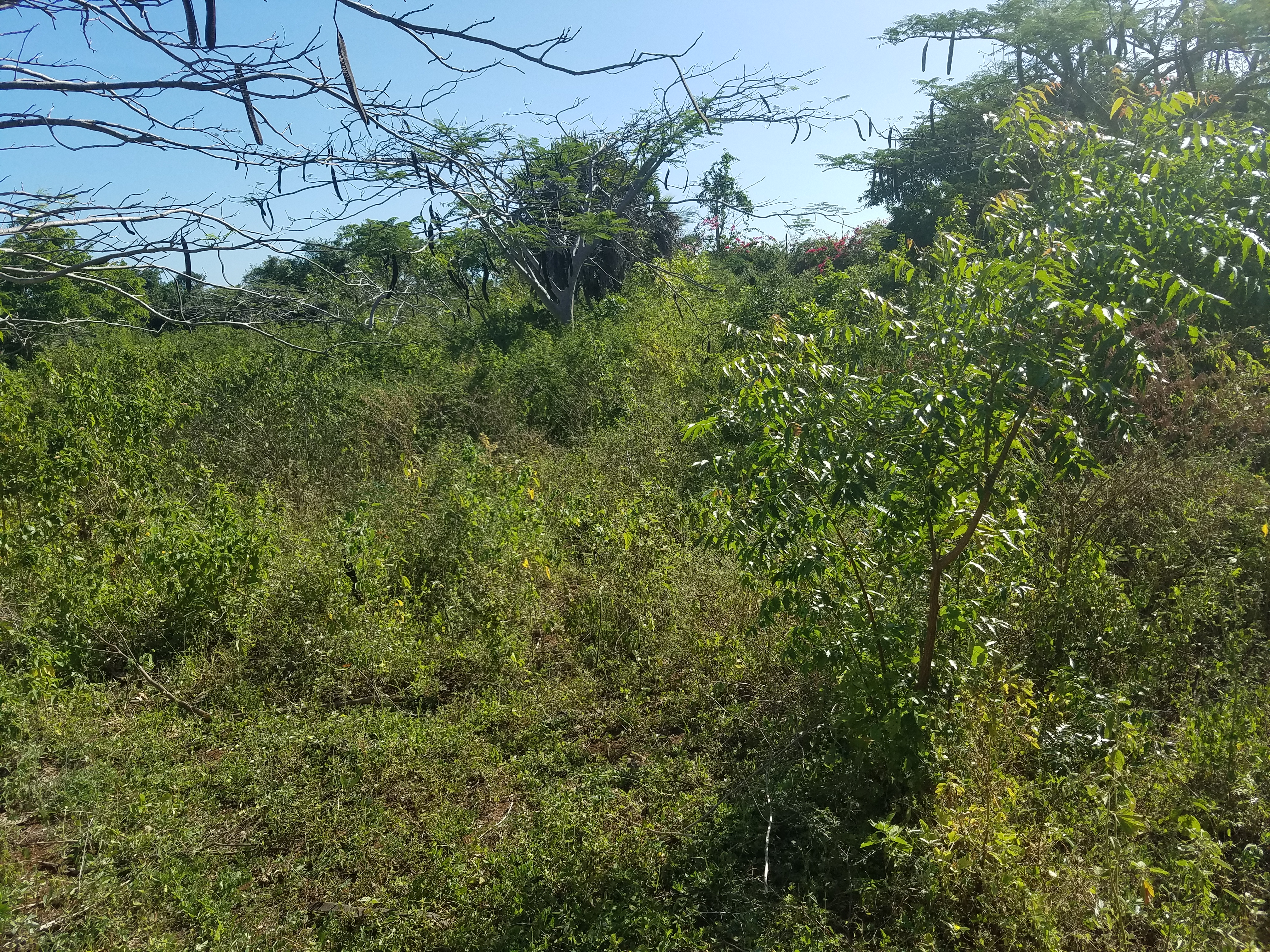 Land for sale in Diani Beach