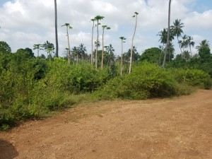 1.75 Acres Land for sale in Galu Kinondo