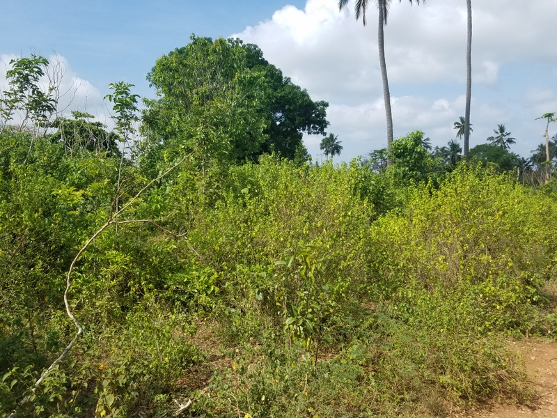 1.75 Acres Land for sale in Galu Kinondo