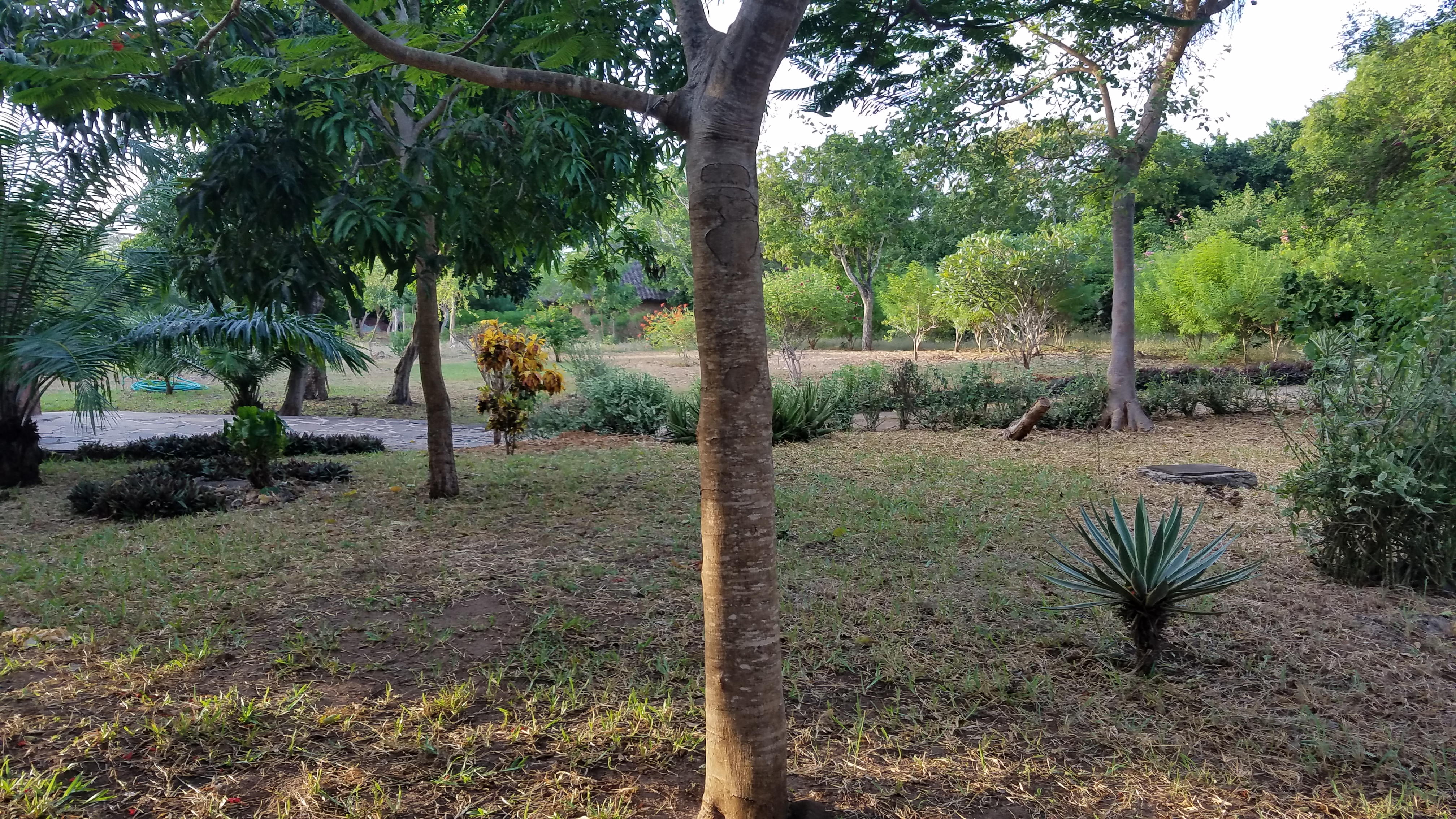 2 Bedrooms Diani Beach Cottage for Sale